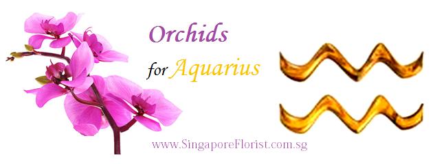 Orchids for Aquarius Singapore Florist