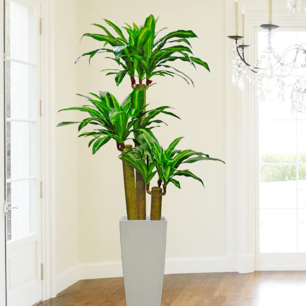 Artificial Dracaena Plants 180cm Total Height