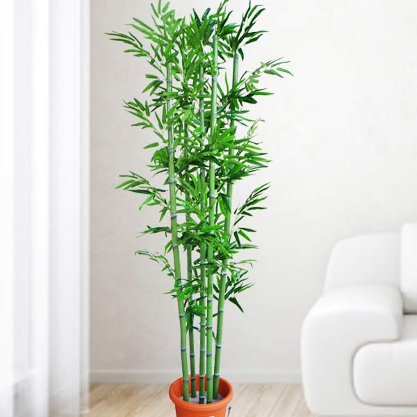 Artificial Bamboo Tree 2 Meter Height