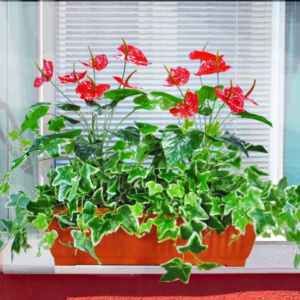 Artificial Red Anthurium Flowers & Ivy in 60cm Long Planter Box.
