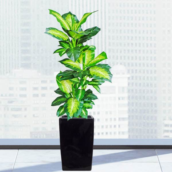 Artificial Dieffenbachia Plant With Fiberglass Planter Total Height 160cm