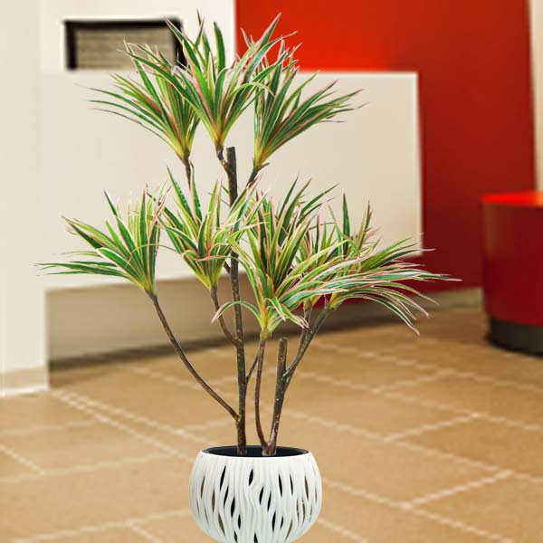 Artificial Dracaena Marginata Plants 1 Meter Height