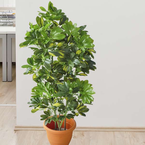 Artificial Schefflera Plants 100cm Height
