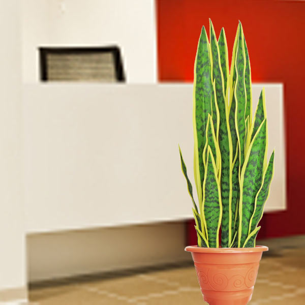 Artificial Sansevieria 60cm Height