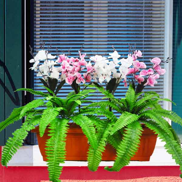 Artificial Orchids & Boston Ferns in 60cm Long Planter Box