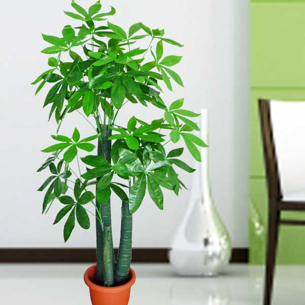 Artificial Pachira Tree 5 Feet