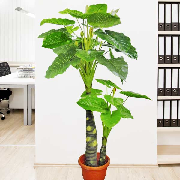 Artificial Alocasia Plants 200cm Height