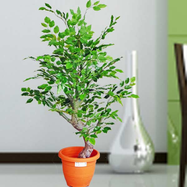 4 Feet Artificial Green Ficus Tree