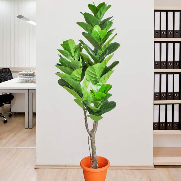 Artificial Fiddleleaf Fig Tree 6 Feet Height
