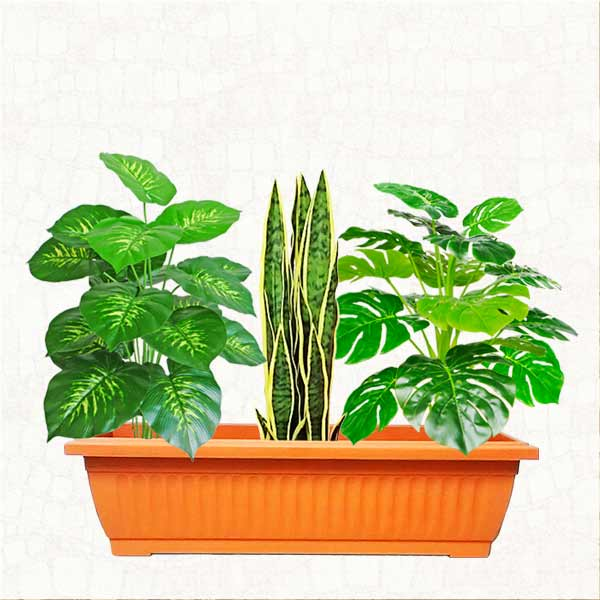 Artificial Dieffenbachia Plants Group