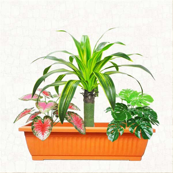 Artificial Dracaena Plant Group in Planter Box