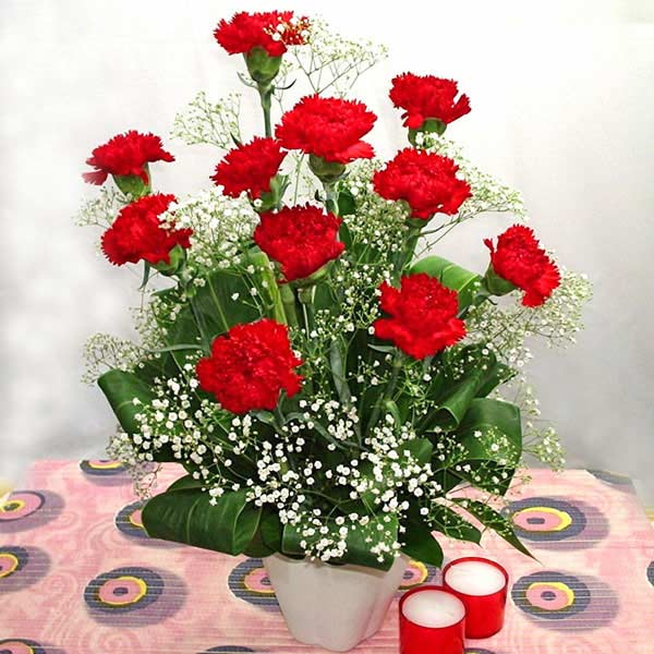 12 Red Carnations in Vase