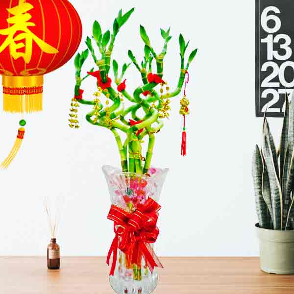 8 Curly Bamboo with Red ribbon and chinese decoration with glass vase
