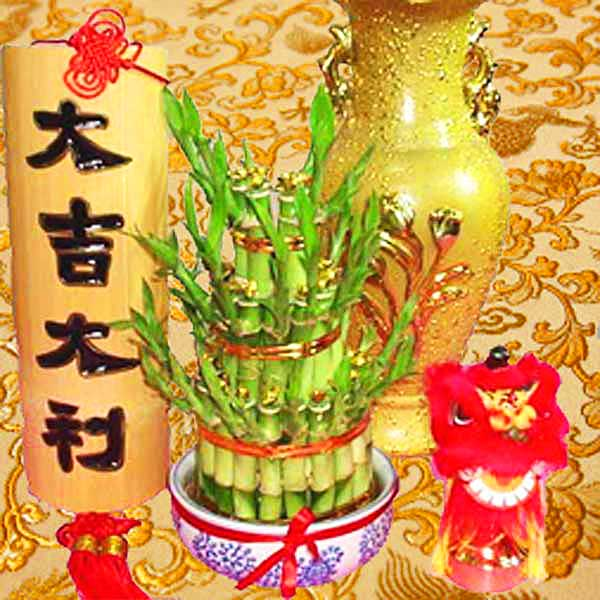 3 layers lucky Bamboo special decorated with Gold Ingot