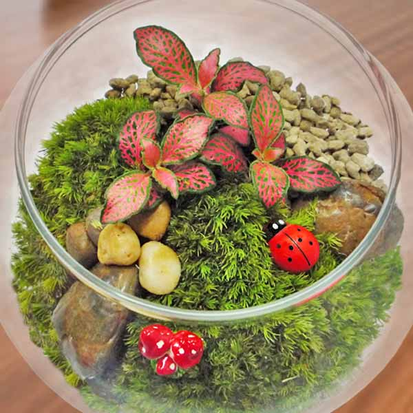 Glass Bowl Terrarium Plants 11cm Height