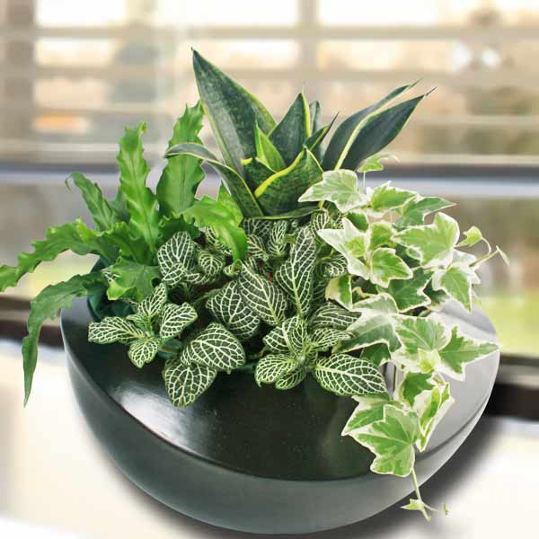 4 Assorted Green Plants In Vase