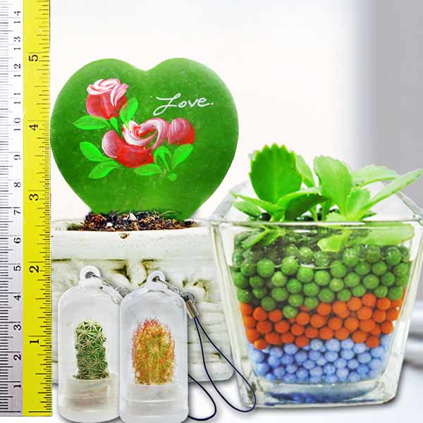 Heart Shape HOYA Plant, Mini Indoor Hydroponic Plant & 2 Mini Key Chain