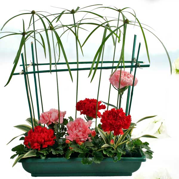3 Pink 3 Red Carnations Table Arrangement With Mini Cyperus