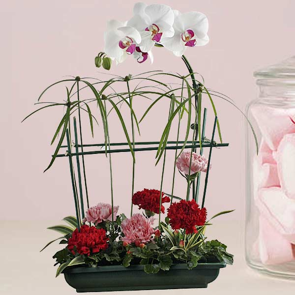 Phalaenopsis Orchids & Carnations Table Arrangement