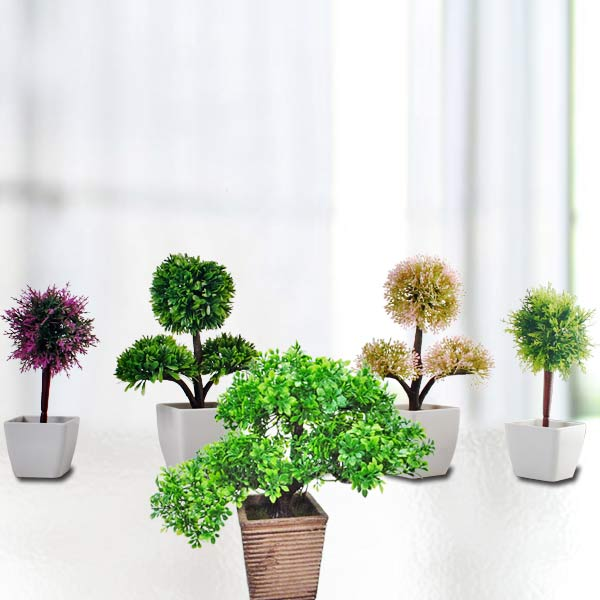 Mini potted plants singapore