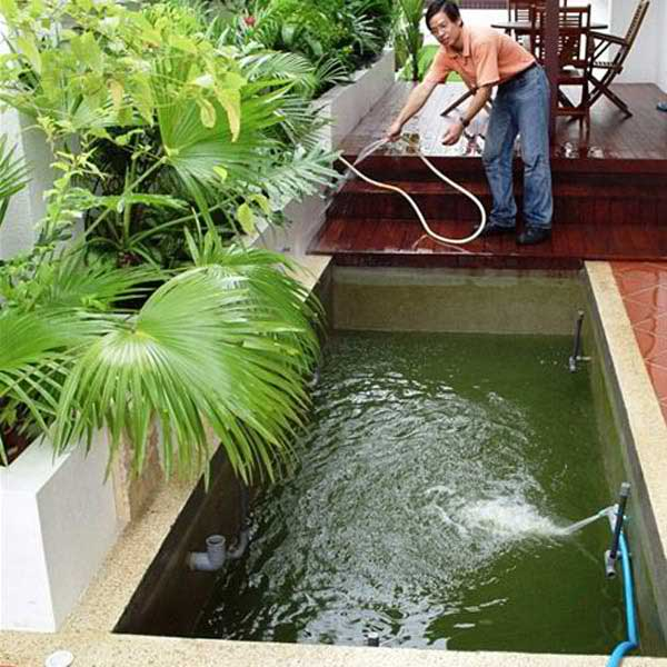 Koi pond cleaning experts pond plants that filter ikan for Backyard pond maintenance
