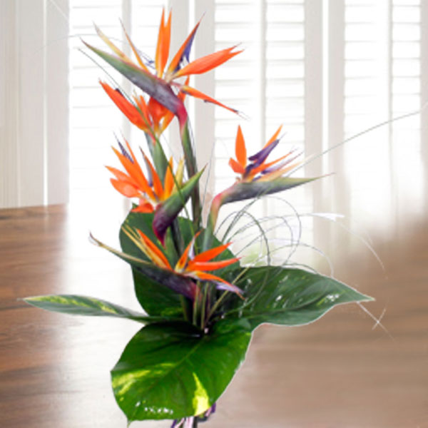 5 Bird of Paradize with money plant foliage Handbouquet