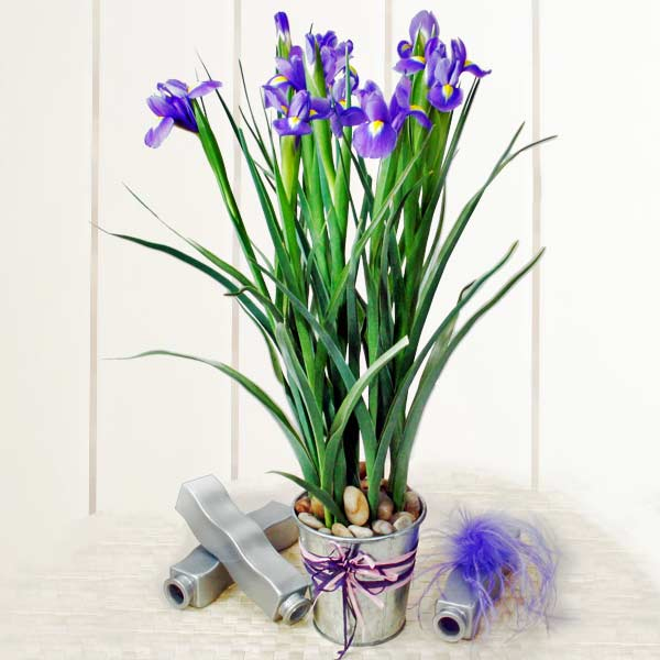10 Blue iris table arrangement (2 days advance order )