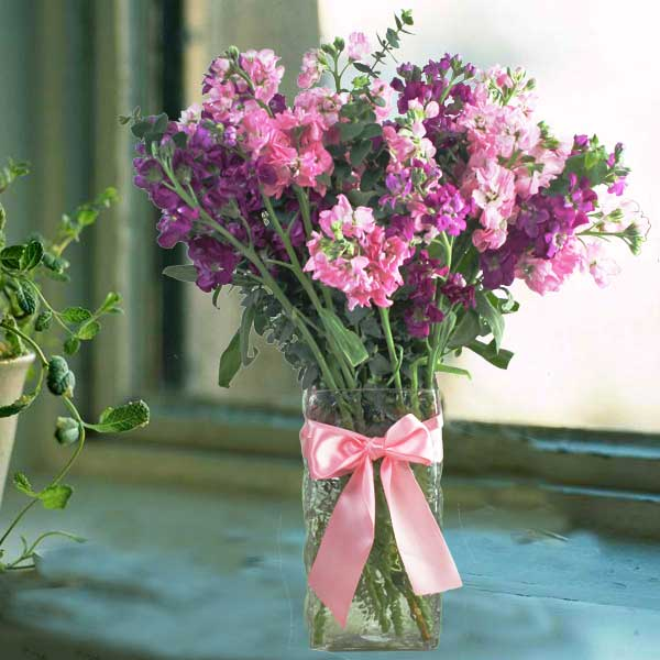Matthiola Flowers In Glass Vase