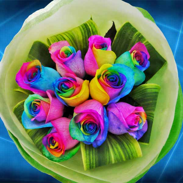 Rainbow roses Delivery